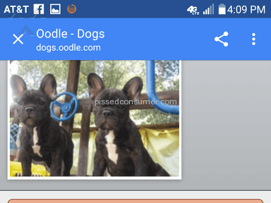 Oodle Advertisement review 169004