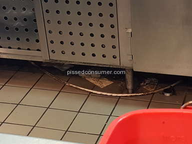 Steak N Shake Sanitary Conditions review 158206