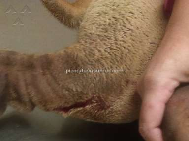 Petco Pet Stores review 92921