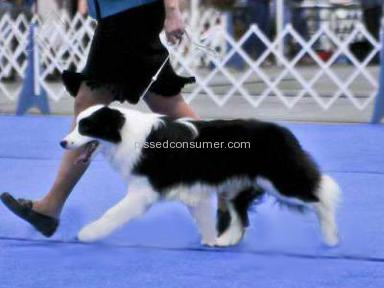 Edelweis Kennel Animal Services review 4763