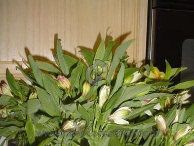 Proflowers Bouquet review 6233