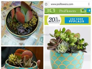 ProFlowers Succulent Plant review 131645
