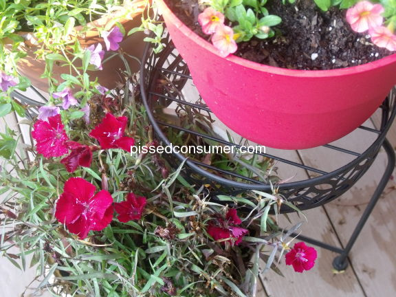 Better Homes And Gardens Planter