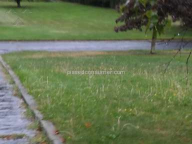 Trugreen Lawn Aeration Service review 162446