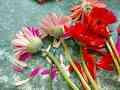 Avasflowers Flowers