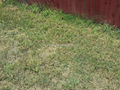 Trugreen Lawn Service review 164408