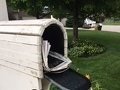 Usps Mail Service