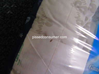 MyPillow Pillow review 381314