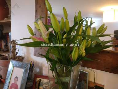 Prestige Flowers - Ordered Lilies and Roses... Got dead lilies only...