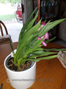 Proplants Plant