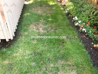 TruGreen Lawn Service review 306010