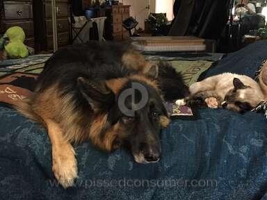Best Shepherd Kennels German Shepherd Dog review 226750
