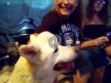 Ramona Humane Society Manager review 224272