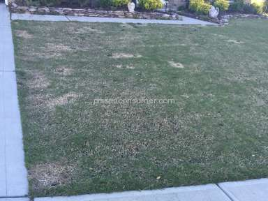 Trugreen Lawn Service review 125531