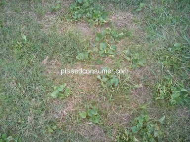 TruGreen Lawn Service review 329762