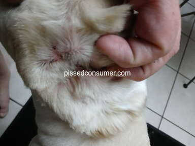 Petco Pet Stores review 931296