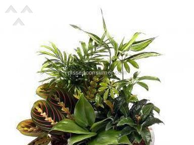 Avasflowers Plant review 171924