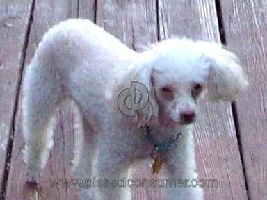 Avery Bennett Pet Medicine and Veterinary Clinics review 6856