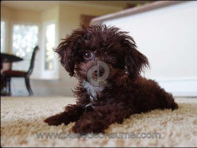 Jordan Family Treasures - Wonderful healthy puppy 5 stars