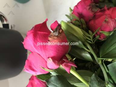 Prestige Flowers Roses Flowers review 311986