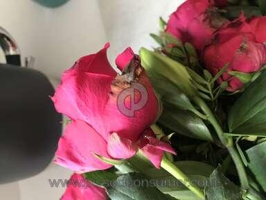 Prestige Flowers Roses Flowers review 311986