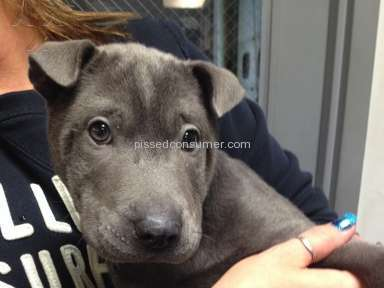 NextDayPets Animal Services review 50537