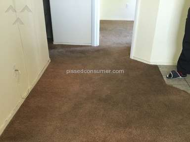 Desert Carpet Cleaners Carpet Cleaning Service review 139469