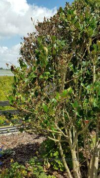 Trugreen Tree And Shrub Care