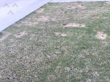 Trugreen Lawn Service review 125523