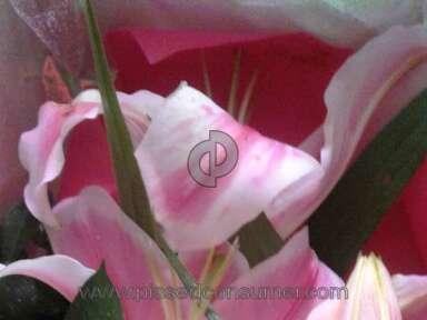 Premium Florist - Estafa!!