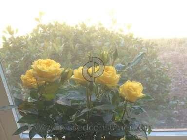 Ftd Flowers / Florist review 67899