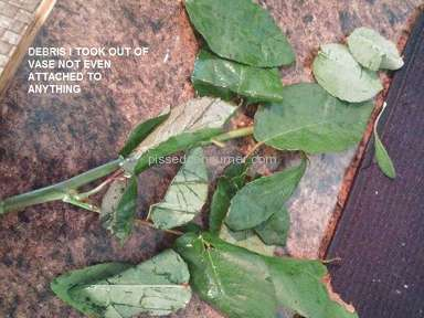Avasflowers Dozen Red Roses Arrangement review 212618