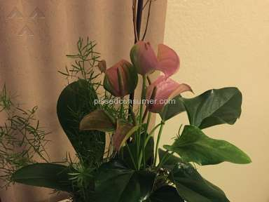 Avasflowers Plant review 171922