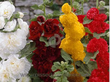 Bloomsz Flowers / Florist review 124051