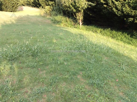 Scotts Lawn Service Lawn Service