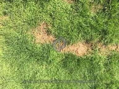 Pennington Seed Grass Seeds review 283864