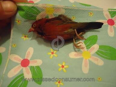 Bird Cage Pet Shop - Birds all die and are diseased inbreed defective birds