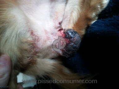 Banfield Pet Hospital Pet Medicine and Veterinary Clinics review 45331