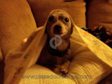 Petsmart Purina One Dog Food review 387688