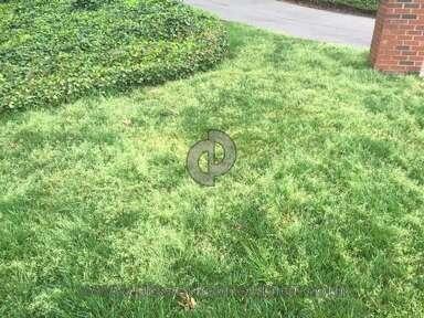 Scotts Lawn Service Lawn Service review 124039