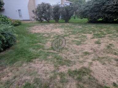 TruGreen Grub Pest Control review 330472