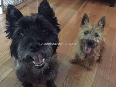 Foxcreek Kennels Cairn Terrier Dog review 246212