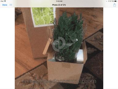 ProPlants European Cypress Plant review 252832
