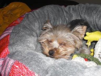 Petplan Pet Insurance review 874