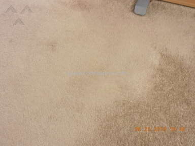 Luna Flooring - Carpet 1 year old