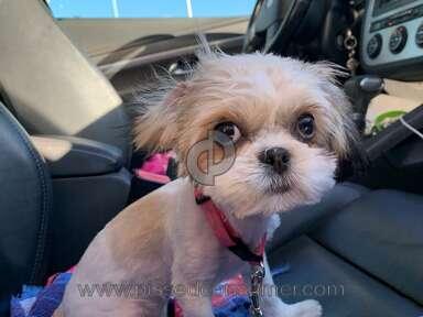Petsmart Grooming Service review 425946