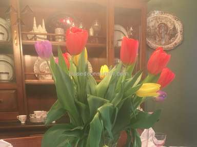 1800Flowers Tulips Flowers review 279060