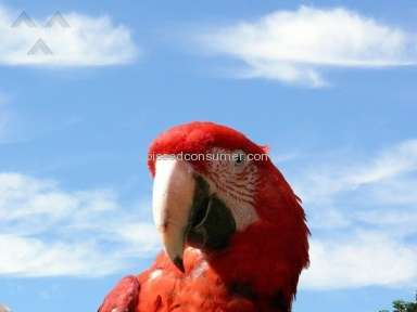 Birdsnow - Uship - Scarlet Macaw Review from Trumbull, Connecticut
