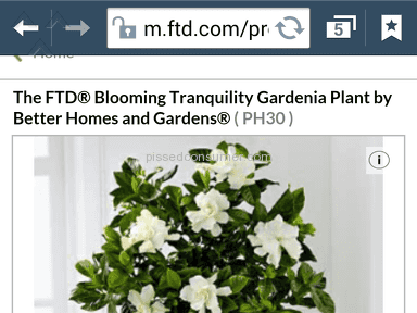 Ftd - Better Homes And Gardens Blooming Tranquility Gardenia Plant Plant Review from Massillon, Ohio