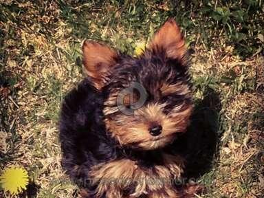 Puppy Boutique Pet Stores review 24351